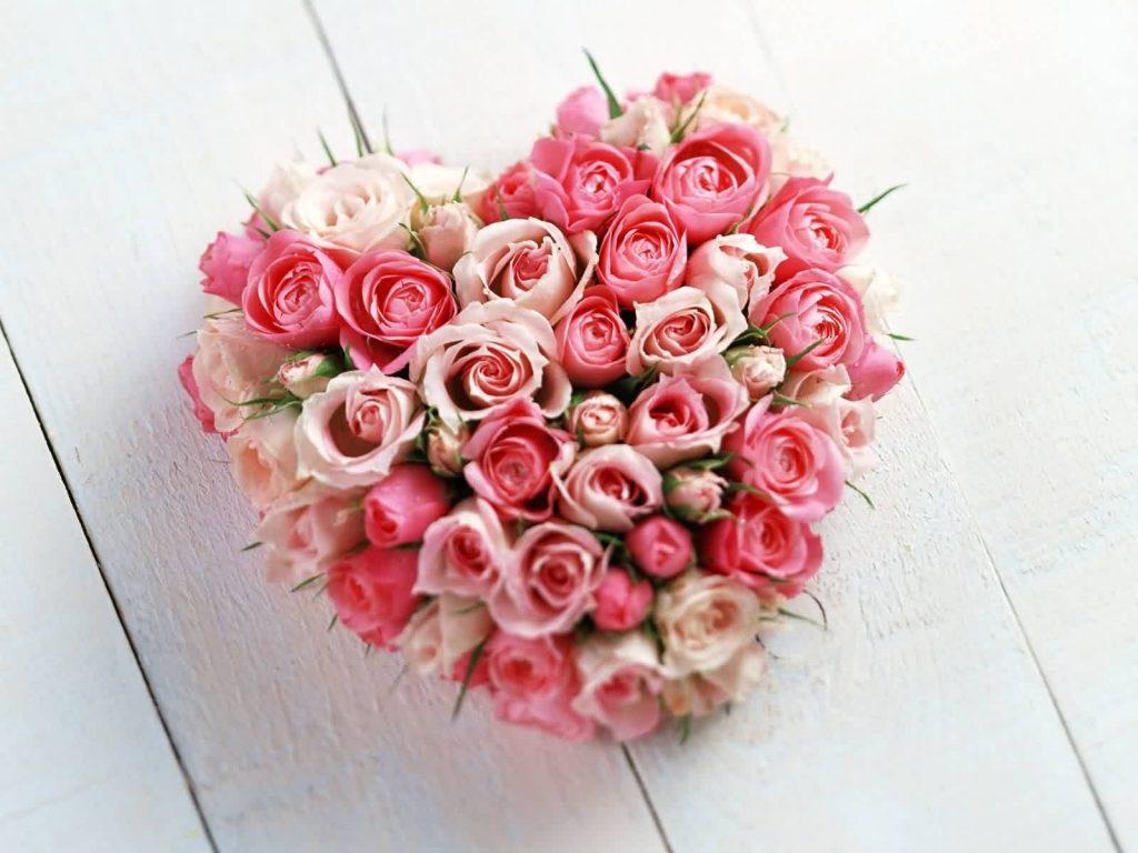 Pourquoi offre t'on des roses à la saint valentin?